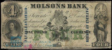 molsons 1855